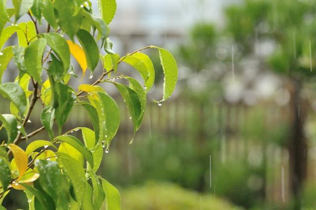 韓国語の『雨が降る』は3つ表現がある?違いと意味を解説!